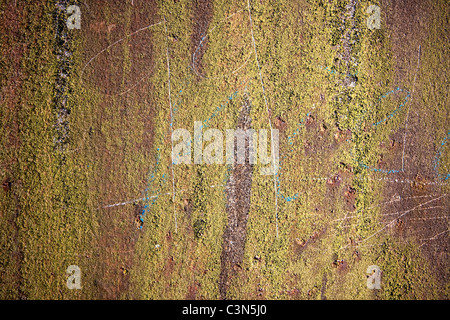Photography shows a rusty metall background and moss. - Stock Image