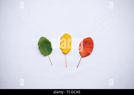 Colorful leaves on a white background in minimal style. The concept of the seasons. - Stock Image