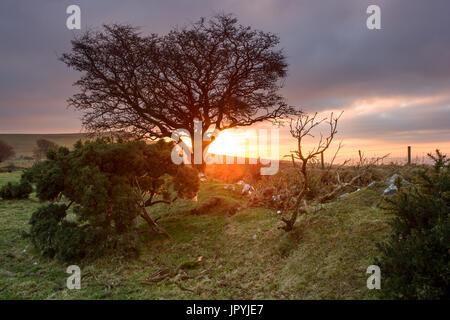 Sunset from Prewley Moor Sourton Dartmoor National Park Devon Uk - Stock Image