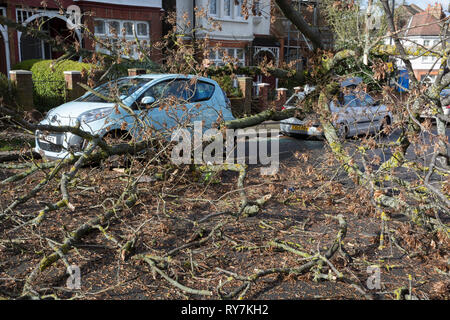 Following strong gusts of winds in south London, a car has been crushed beneath the trunk of a tree on Poplar Road, Herne Hill SE24 - the responsibility of Lambeth council, on 10th March 2019, in London, England. - Stock Image