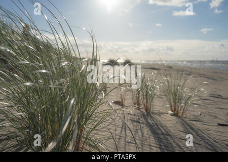 The sun over the sand dunes of the Baltic - Stock Image