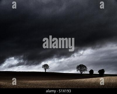 Trees in a field with dark stormy sky, East coast of Scotland, Angus. - Stock Image
