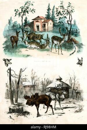 JARDIN D'ACCLIMATATION deer and elk - Stock Image
