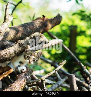 Gorgeous domestic short-haired kitty is sneaking through a pile of thick branches.  Selective focus. A beautiful bokeh is visible in a background. - Stock Image