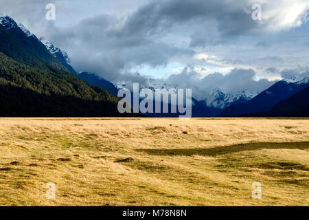 Valley on the Way to Milford Sound - Stock Image