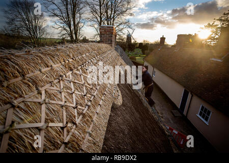 Thaxted Essex England, UK. 8th Jan, 2019. Thatching the Ancient Almeshouses in Thaxted north west Essex. Martin Potter from Sible Heddingham a 5th generation thatcher is seen replacing the Long Straw Thatched ridge on the roof of the Almeshouse known as the Chantry built in the 17th century. Martin Potter is using a mixture of long straw from Yorkshire and Essex to complete the job which is expected to take a month to finish. John Webbs windmill can be seen in the background. Credit: BRIAN HARRIS/Alamy Live News - Stock Image