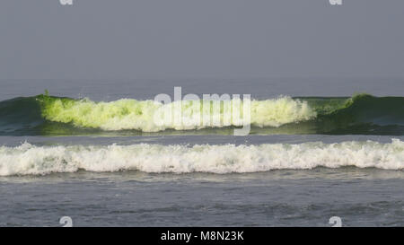 Beach waters with fluorescent green color due to algae and pollution caused by humans. - Stock Image