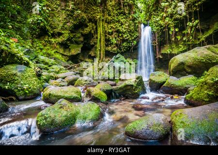 Dominica, Castle Bruce, Morne Trois Pitons National Park inscribed on the World Heritage List by UNESCO, in the tropical undergrowth, Emerald Pool and its waterfall - Stock Image
