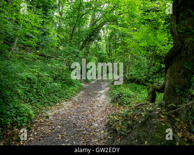 Forest, Sussex, South Downs Way, Brighton, England - Stock Image