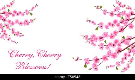 Sakura. Cherry blossoms is located on both sides. Inscription. Isolated on white background. Illustration - Stock Image