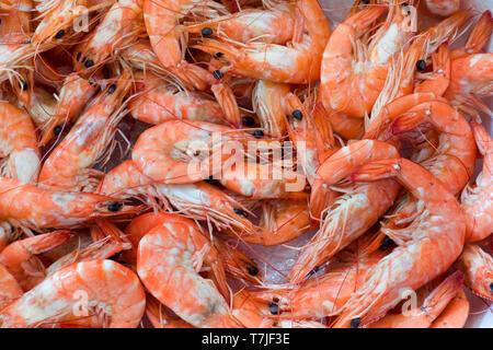 Close up of fresh shrimps at the fish market - Stock Image