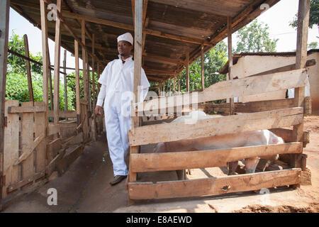Rwandan meat producer poses next to his pig pens, Kigali, Rwanda - Stock Image