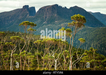 View to Mount Geryon and the Acropolis from Gould Plateau in Cradle Mountain–Lake St Clair National Park, Tasmania - Stock Image