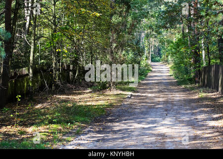 The dirt road in a forest is seen during a sunny day in early autumn. The view is seen in the forests surrounding - Stock Image