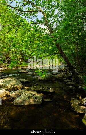 Tellico River, Cherokee National Forest, TN - Stock Image