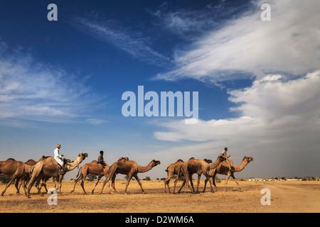 Camel Ride - Stock Image
