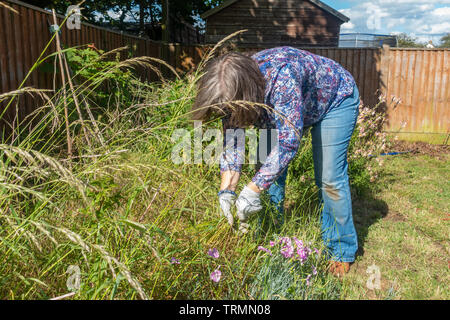 A lady doing weeding in a residential garden. - Stock Image