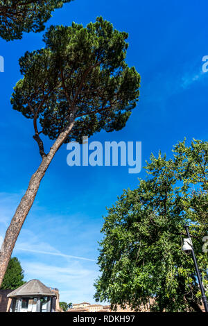Rome, Italy - 24 June 2018: Security post at the ancient ruins at the Roman Forum of Temple of Venus and Roma at Rome viewed from the colosseum. Famou - Stock Image