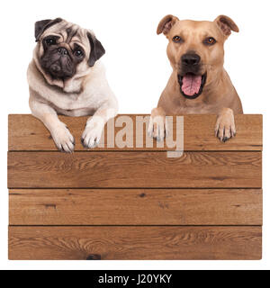 cute dogs, terrier and pug dog, hanging with paws on blank wooden promotional board sign, isolated on white background - Stock Image