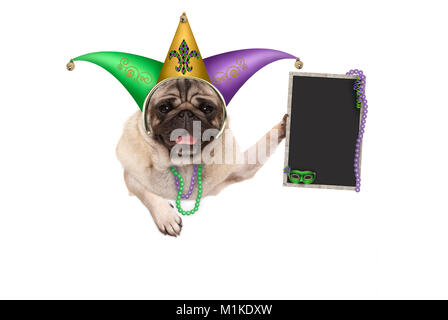 Mardi gras pug puppy dog with carnival jester hat, venetian mask and blank blackboard sign, hanging on white banner, - Stock Image