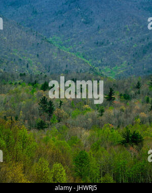 Pisgah National Forest in North Carolina - Stock Image
