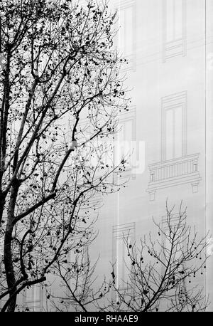 Trees near the facade of a building - Stock Image