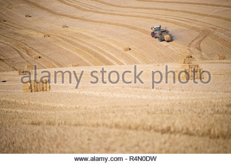 Tractor baler making straw bales in fields after summer wheat harvest on farm - Stock Image