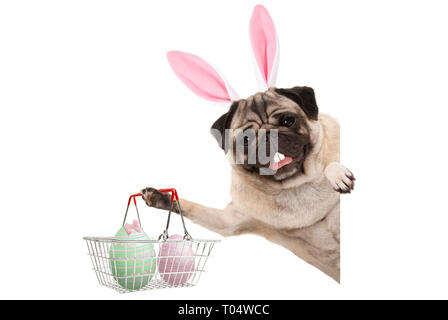 Happy Easter bunny pug dog with bunny teeth and pastel easter eggs in wire metal shopping basket, isolated on white background - Stock Image