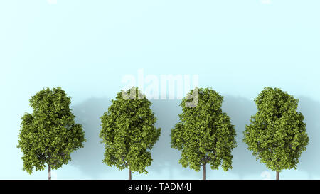 3D rendering, Row of summer trees - Stock Image