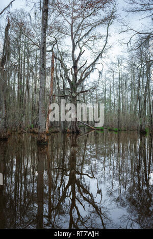 Louisiana swamp, view of a typical wetland environment along the Pearl River in the Louisiana bayou, USA. - Stock Image