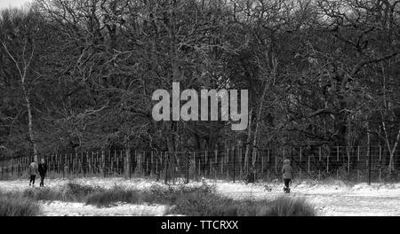 Black and white of walkers in Richmond Park, winter snow, bare trees - Stock Image