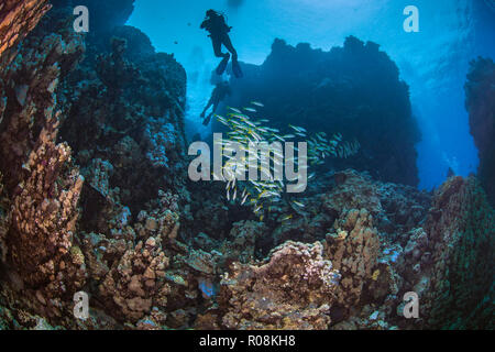 Scuba divers silhouetted in blue water background explore mountainous coral reefs in the Red Sea. September, 2018 - Stock Image