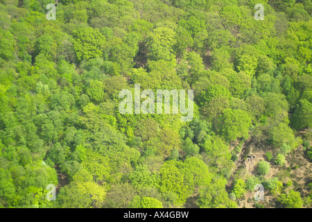 Aerial view of woodlands consisting of Deciduous Trees - Stock Image