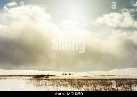 Winter snowscape of wild fields with weeds and large snow clouds and areas of blue sky with nobody in the wintry themed scene and landscape. Row of py - Stock Image