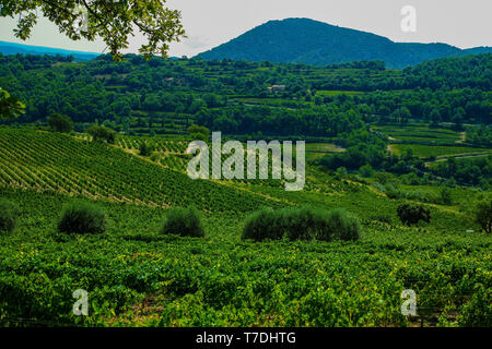 Landscape with green vineyards and mountains in Luberon, Privence, France - Stock Image
