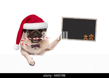 cute Christmas pug dog with santa hat and candy cane, holding blankboard sign in paw, isolated on white background - Stock Image