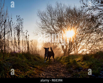 Wirksworth, Derbyshire Dales. 4th Dec 2018. UK Weather: Border Collie dog going for a walk off lead on a cold winter morning during a spectacular sunrise with cloud inversion above Wirksworth in the Derbyshire Dales, Peak District National Park Credit: Doug Blane/Alamy Live News - Stock Image