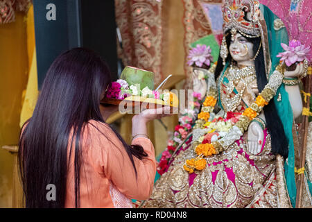 A devout Hindu young woman prays in front of statues of the deities while holding a food and flower offerings. In New York City - Stock Image