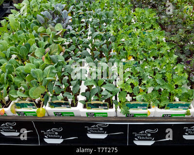 Display of Kitchen Garden vegetable bedding plants for spring planting for sale in a Garden Centre - Stock Image