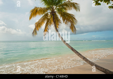 Coconut tree on tropical beach, Pigeon Point, Tobago, Caribbean - Stock Image