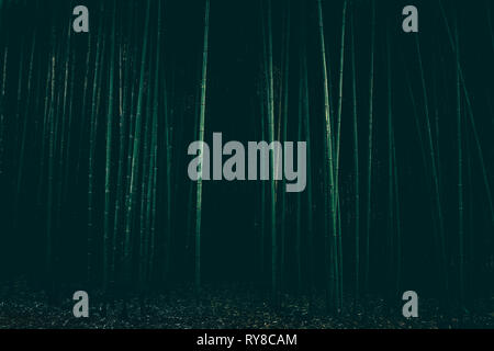 dark scary forest - Stock Image