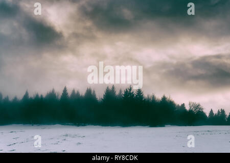 winter landscape with pines and dramatic sky - Stock Image