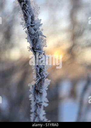 Ice crystals on tree branch - Stock Image
