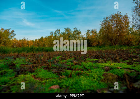 Multicolored small forest and green grass in September - Stock Image