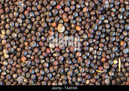 Many tiny black poppy seeds - Stock Image