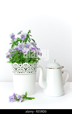 Purple, blue and lilac pansy flowers in a beautiful pot with a vintage enamel jug on white background, copy or text space - Stock Image