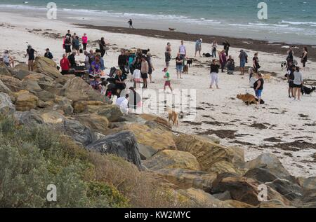 A group of border collies and their owners meet on a windswept beach. - Stock Image