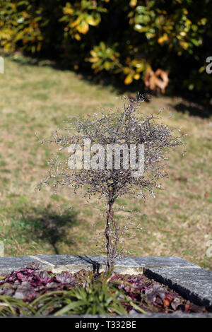 A small tree in a park located in Nyon, Switzerland. Photographed during a sunny spring day. This little tree does not have any leaves. - Stock Image