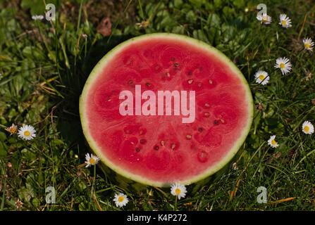 Watermelon Citrullus lanatus var. lanatus - Stock Image