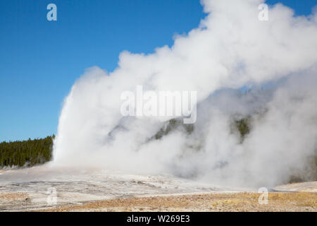 Old Faithful Geyser eruption in the Yellowstone national park, USA - Stock Image